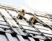Malaysian monkeys take Maersk ride to Europe