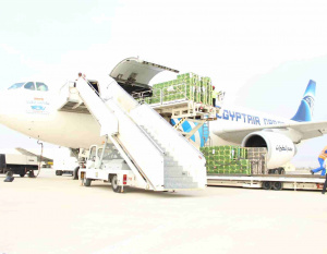 BIG PICTURE: 60-million honey bees flown to RAK