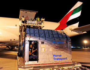 All the King's horses transported by Emirates SkyCargo