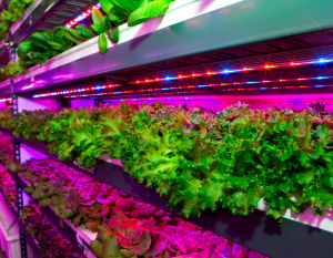 Emirates Flight Catering invests in supply chain with world's largest vertical farm