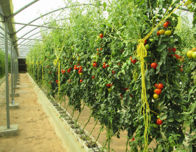UAE wants more landowners to become farmers to secure local fresh food supply chain