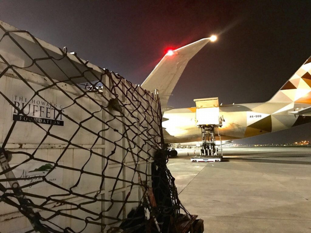 Ten rhinos travelled on the first flight, and nine on the second, along with the three vets and two attendants who accompanied them for the duration of their entire journey from Johannesburg to Akagera National Park.