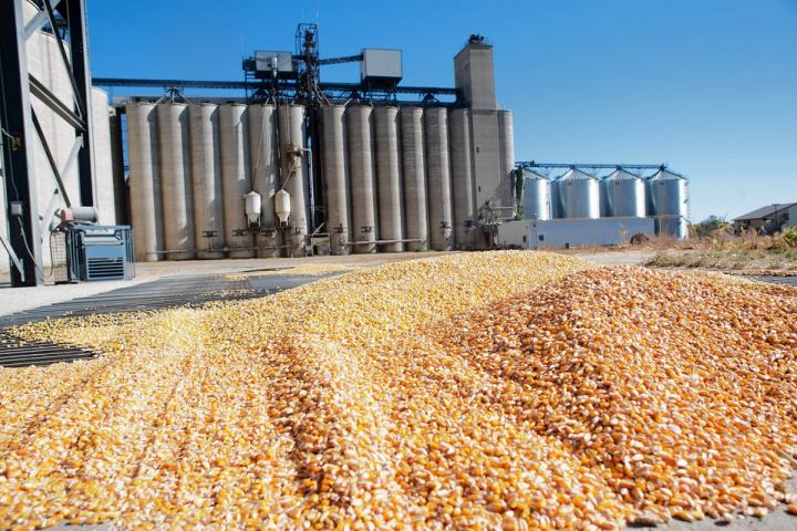 Saudi arabia, Grain, Flour, Food security, Food supply chain