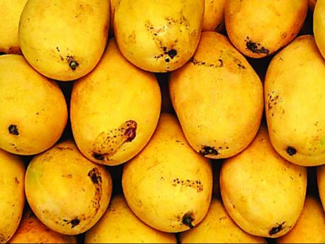 Mongos are one of Pakistan's biggest exports, with 32% of all mangoes exported being sold in the UAE.