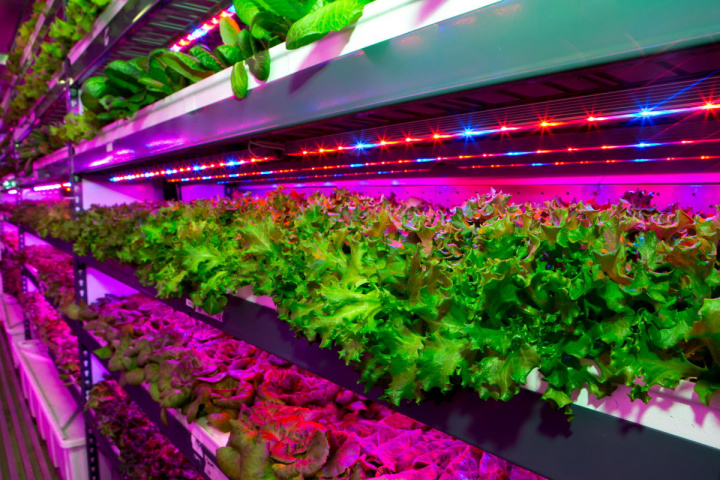 The new facility is the largest vertical farm in the world and will give EKFC the equivalent of 900 acres of farmland.