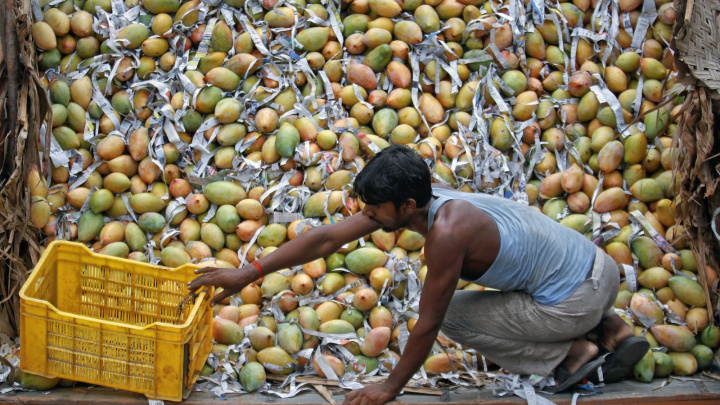 India is one of the largest Mango producers in the world.
